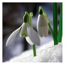 Pavasara brīvlaiks
